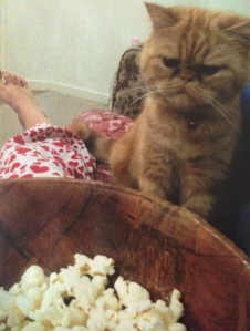 Look how grumpy Garfield is?